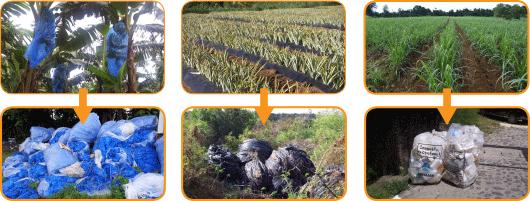 Collecte des différents déchets agricoles